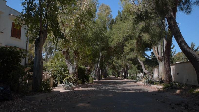 Viale alberato residence vicino Gallipoli nel Salento