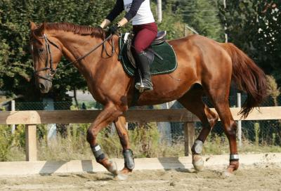 Corse di cavalli in Umbria