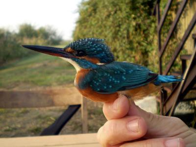 Birdwatching in the region Emilia Romagna, Italy