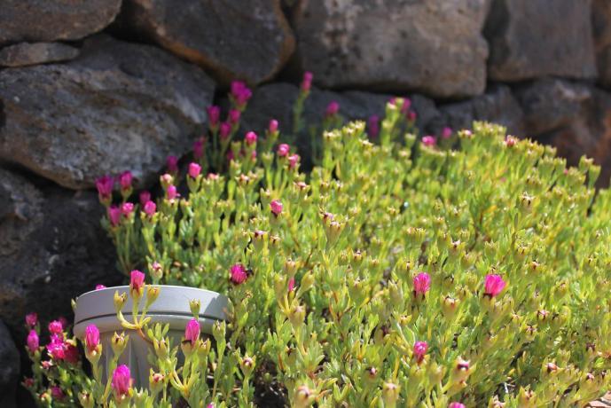 Fiori in giardino agriturismo Adrano vicino Parco Etnaland