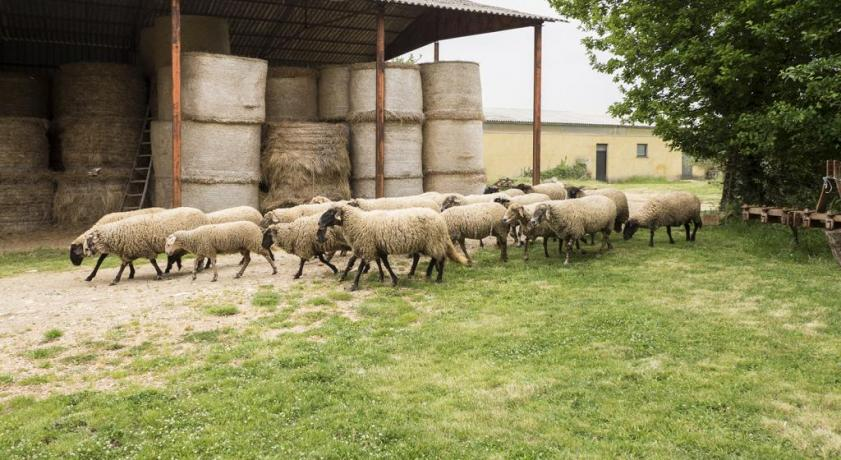 Casale in Azienda agricola con camere e autogestione