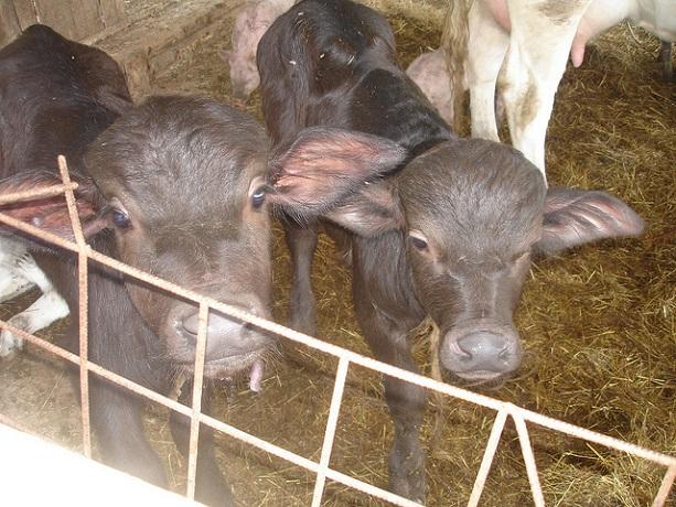 Animali in Agriturismo ideale per Famiglie