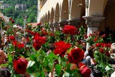 Rose Santa Rita