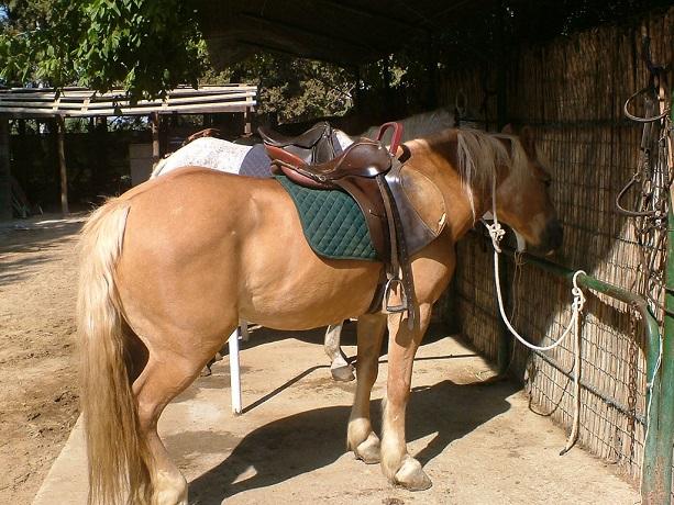 Villaggio ideale per Passeggiate a Cavallo