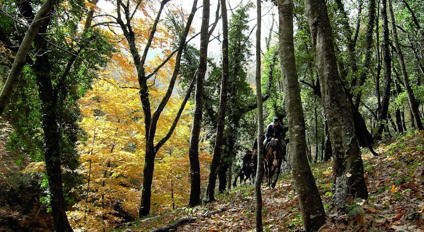 escursioni a cavallo nella zona