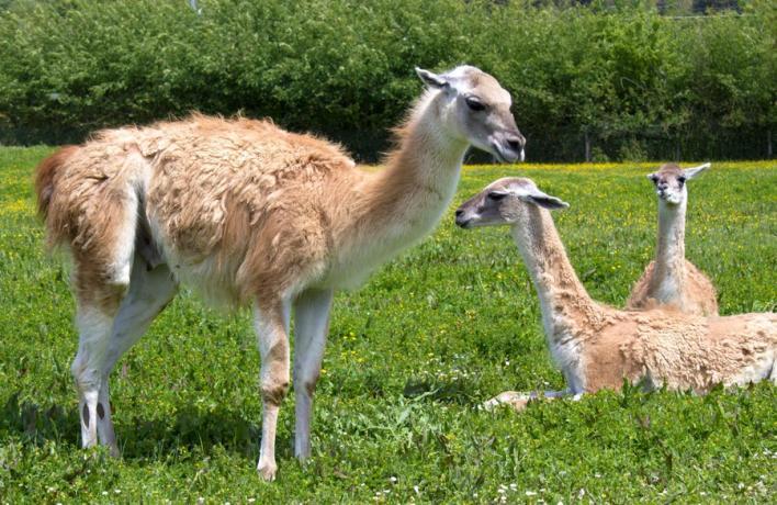 Hotel vicino Parco con Animali in Umbria