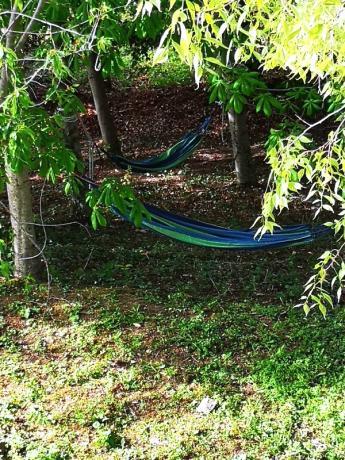 Amache in giardino: verde dell'Umbria
