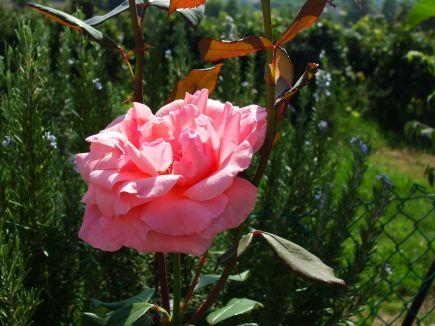Fiore ed erbe aromatiche Agriturismo Nuvolino