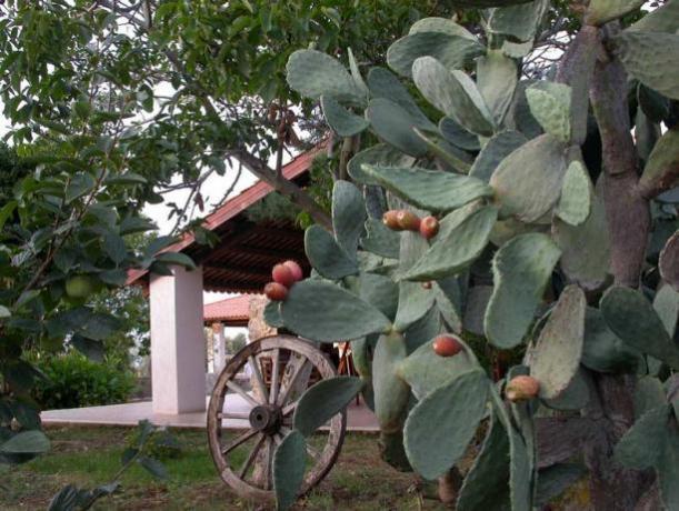 Prodotti tipici Calabresi- Agriturismo vicino Tropea