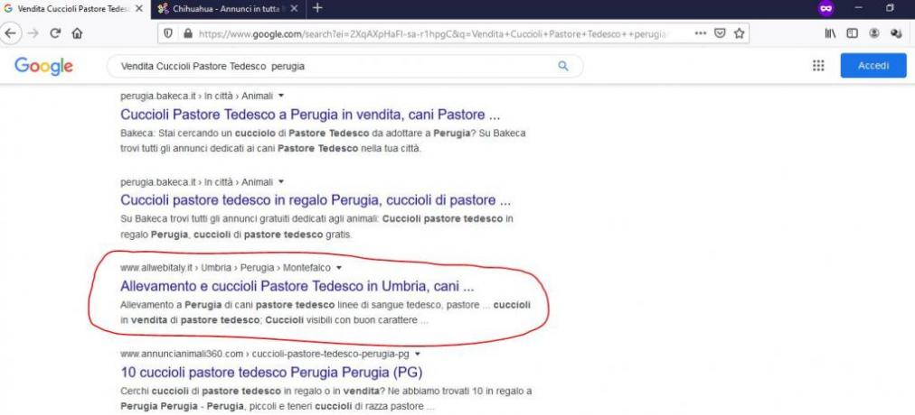 Posizionamento SEO Google: Vendita-cuccioli-pastore-tedesco-perugia