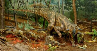 Mostra dinosauri Gubbio. Dove soggiornare