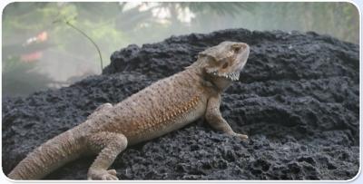Reptile in Oltremare