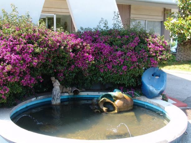 Piccola fontana con siepe fiorita