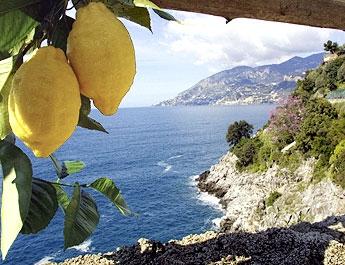 Sorrento citrus production, limoncello di sorrento