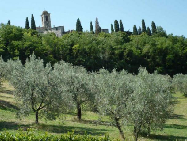Casale giardino ulivi Montecchio vicino Orvieto