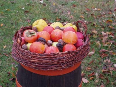Frutta di stagione e verdura