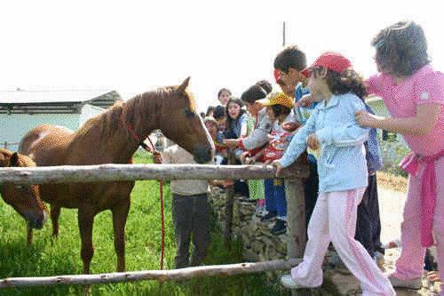 Cavallina e mini pony