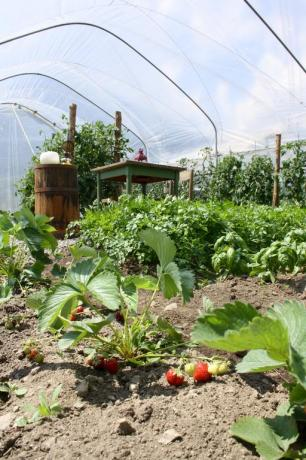 Agriturismo con orto vicino Pinzolo