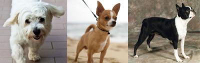 perugia-negozio-paradiso-degli-animali-vendita-cuccioli