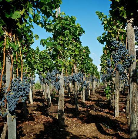 Realis a Lipari con azienda vinaria Sicilia