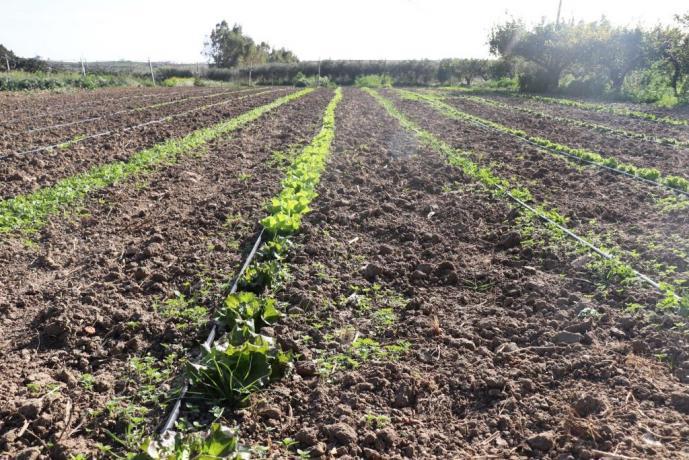 Agriturismo con azienda agraria Trapani