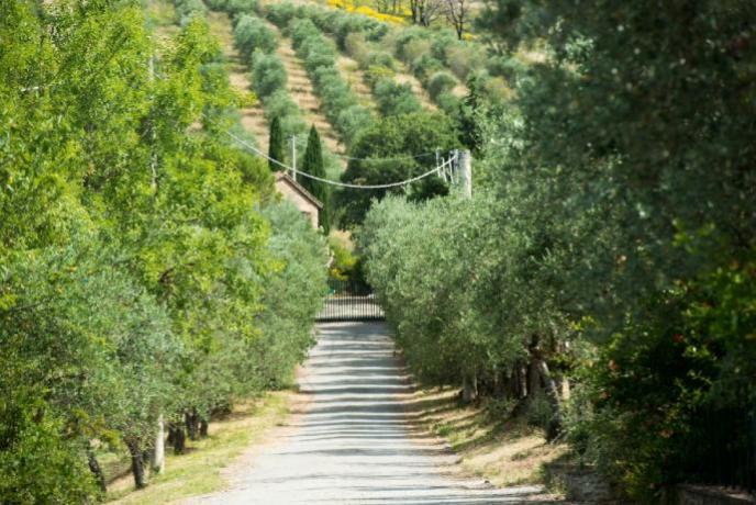 Agriturismo in Umbria immerso nel verde