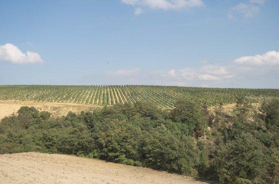 Vista dall'Agriturismo Biologico MontePeglia