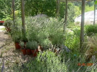 vivaio biologico piante officinali umbria