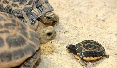 Protezione delle specie all 39 acquario hotel e b b vicino for Acquario tartarughe prezzo