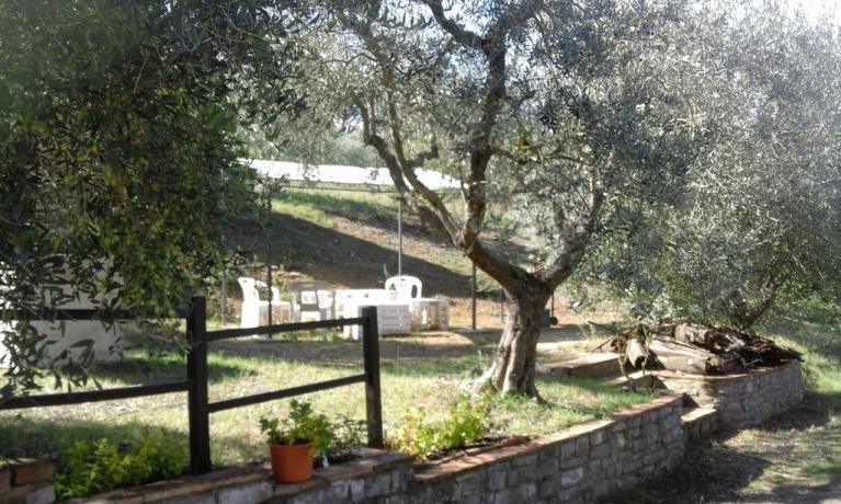 Ulivi giardino casale a Collelungo, vicino Todi