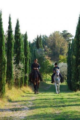 Possibilità di passeggiate a cavallo, villa vacanza trevi