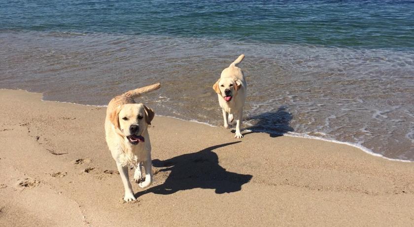 Hotel con Spiaggia Privata Animali Ammessi Castelsardo