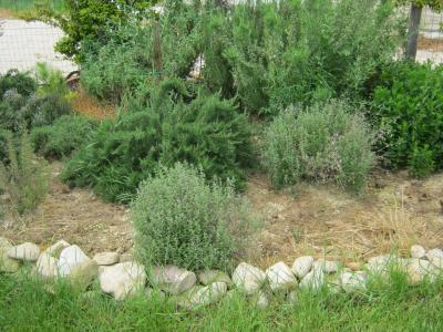 Zona piante aromatiche al Parco Cerimonie ad Assisi