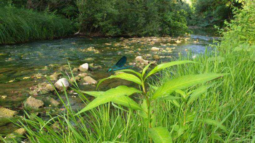giardino sul fiume