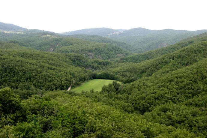 Panorama nel verde tranquillo