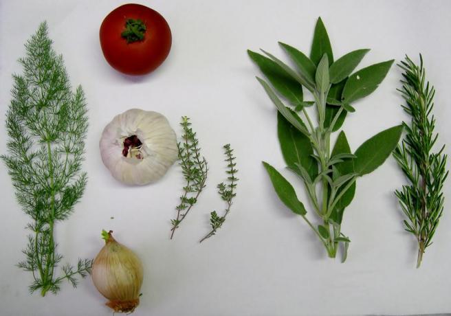 cucina km0 toscana saturnia