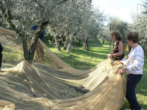 Agriturismo con Raccolta delle Olive Umbria-Perugia