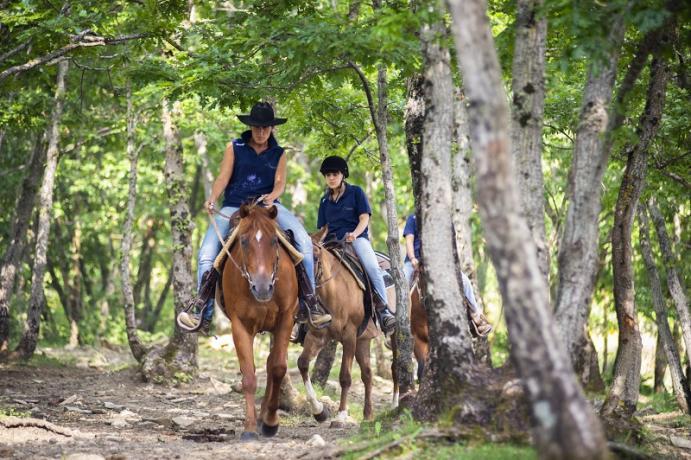 Cavalli nell'agriturismo a Gubbio con maneggio