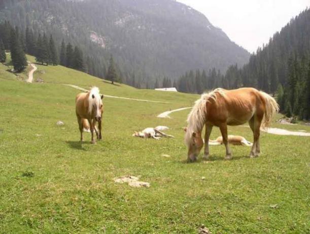 Animali, tanto verde e relax