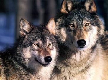 Natural Wildlife, Park of Mount Navegna and Cervia
