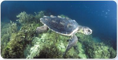 Tartarughe in acquario ad oltremare hotel alberghi b b for Acquario tartarughe prezzo