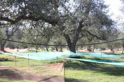Azienda Agricola biologica con alberi da frutto