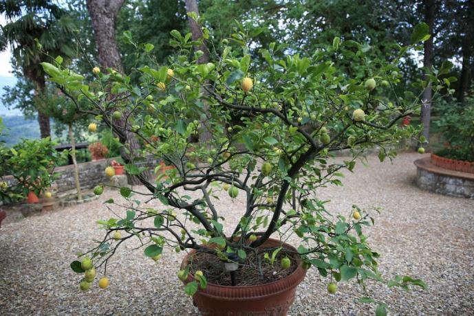 Le nostre piante all'interno del giardino