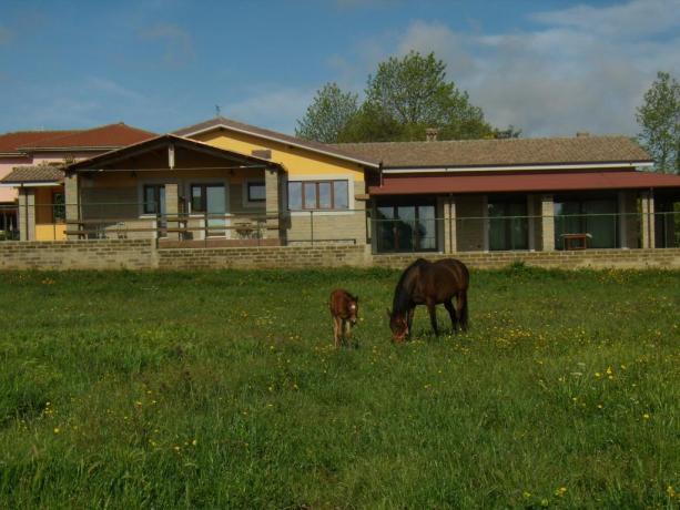 Agriturismo in Campagna con piscina : I Cavalli