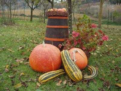 I prodotti di stagione della fattoria