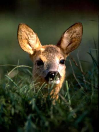 Wildlife and Natural Fauna in Emilia Romagna
