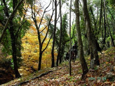 Escursioni a cavallo gratuite a Manfredonia