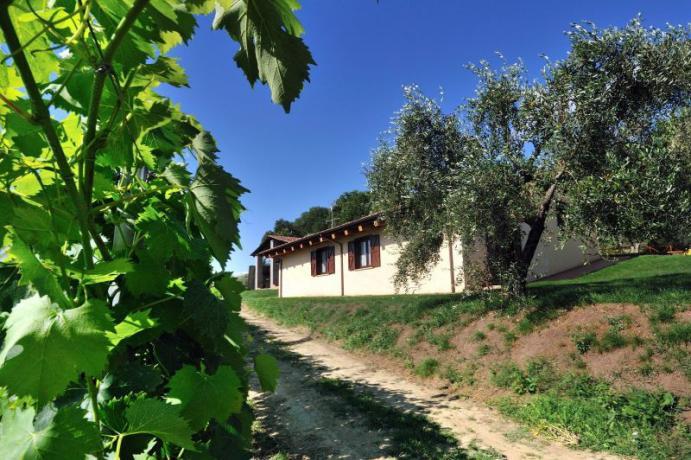 Vista del casale, appartamento tra vigneto, Montebuono
