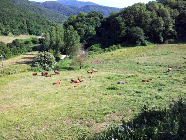 Agriturismo nel Lazio-immerso nella natura