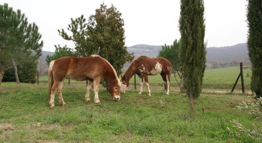 fattoria degli animali